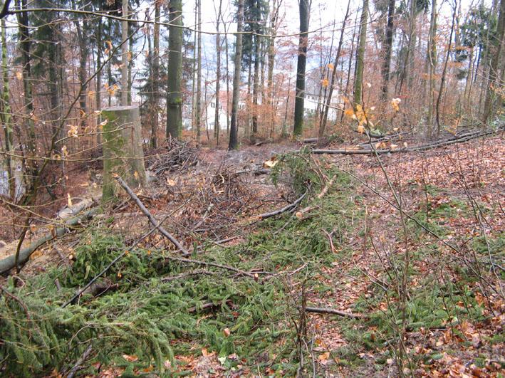 Gigeliwald Trail Sturmholz